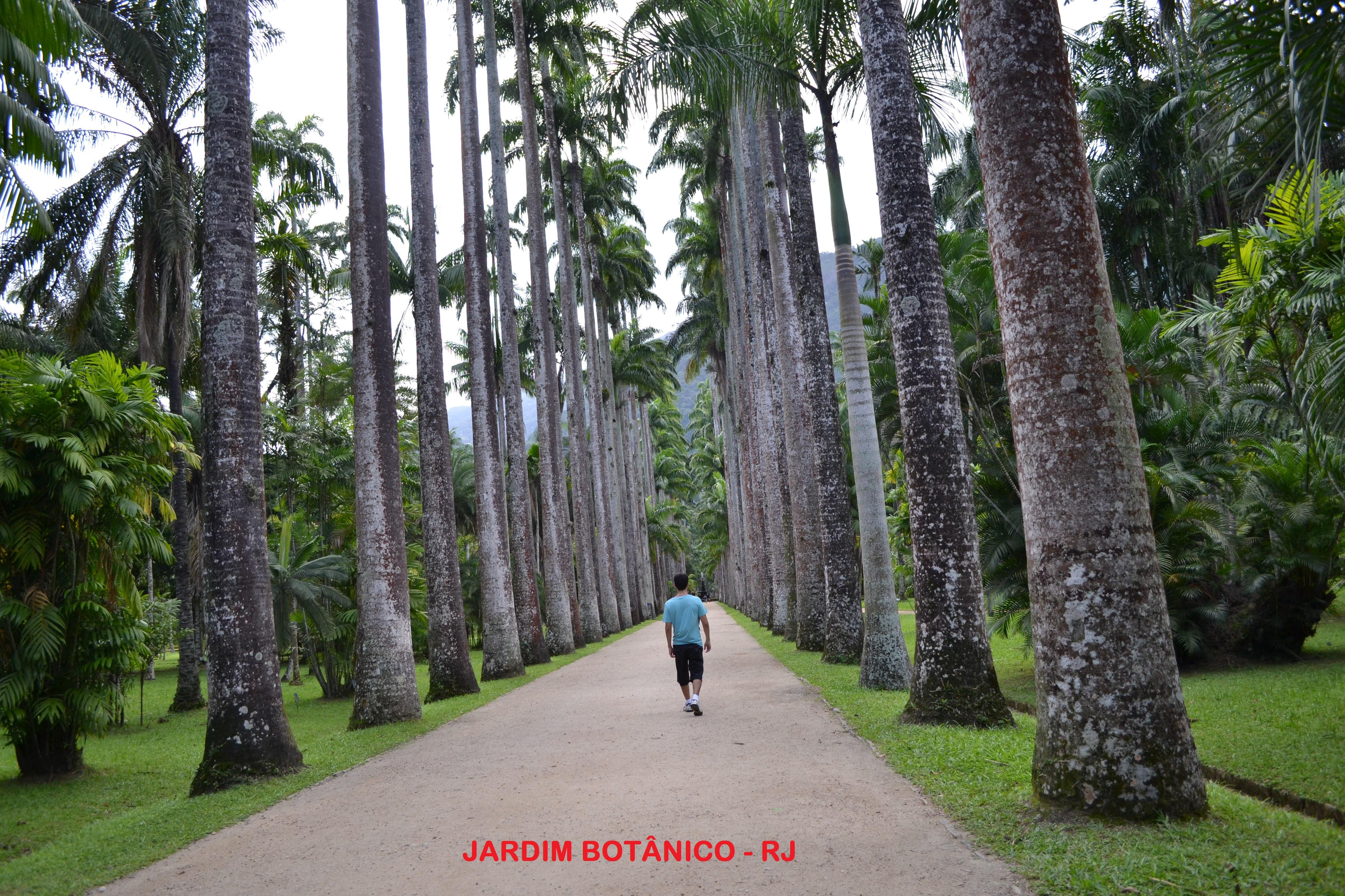 Jardim Botânico de Rio de Janeiro  COM PÉ NA ESTRADA