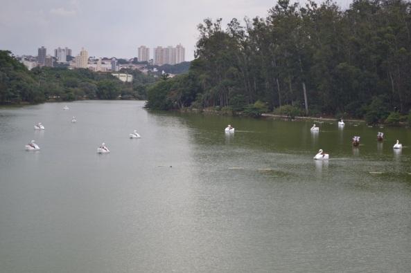 Parque Taquaral (30)
