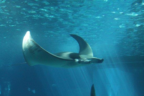 1 - oceanario-de-lisboa
