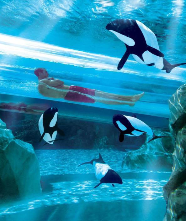 15 - aquatica