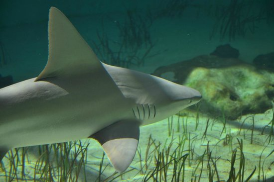15 - mote-marine-aquarium