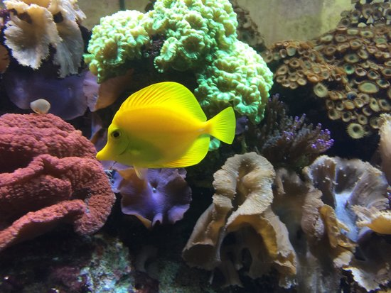 17 - peixinho-amarelo