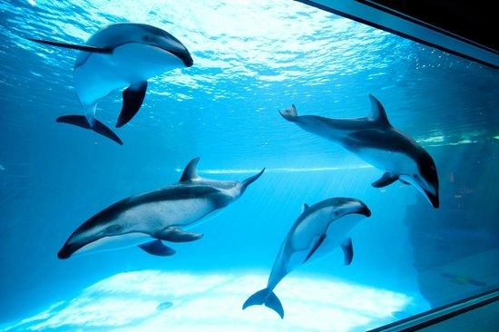 18 - shedd-aquarium