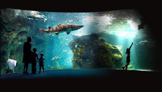 21 - amphitheatre-des-requins