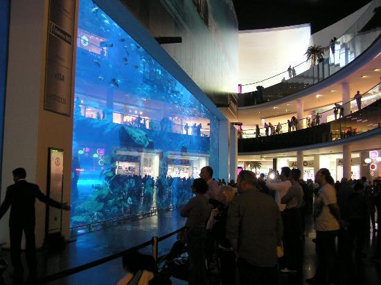 24 - Dubai Aquarium & Underwater Zoo